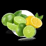 menu-citricos-3
